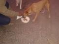 Feeding Dog - 1