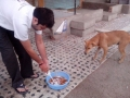Feeding Dog-2